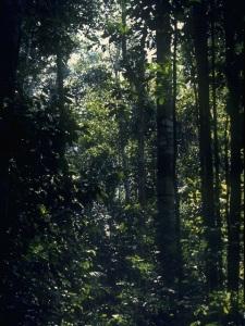 floresta amazonas